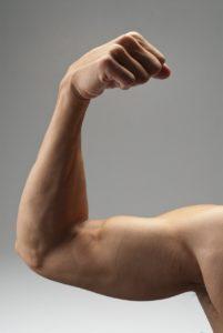 Biceps and Triceps