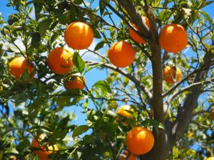 Disease Prevention: One of the Health Benefits of Oranges